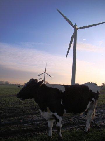 jorgenu-tranbergu-prinasajo-denar-krave-in-vetrnice-hcpx.JPG